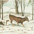 Deer In Snow by Samuel Showman