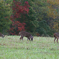 Deer In The Fall by James Jones