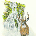 Deer In The Mist by Halie French
