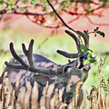 Deer In The Orchard by Wesley Aston