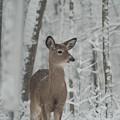 Deer In The Snow by Douglas Barnett
