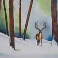 Deer In The Forest by Francisco Ventura Jr