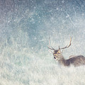 Deer In Winter Scene by LHJB Photography