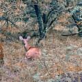 Deer In Woods by Robert Brown