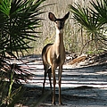 Deer by J M Farris Photography