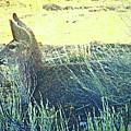 Deer Lying Down by Lenore Senior