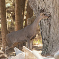 Deer On The Look Out by Jason Hughes