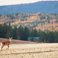 Deer Poses In The Fall by Bret Barton
