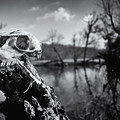 Deer Skull by David Oakill