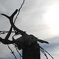Deer Skull In Wire by Andrea Lawrence