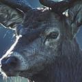 Deer by Steve Somerville