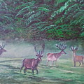 Deer by Zoran Tomich