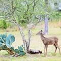 Deer19 by Jeff Downs