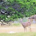 Deer21 by Jeff Downs