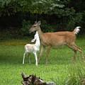 Deers by Aline Kala