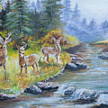 Deers At The Water by Amber Ellison
