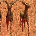 Deers by Miriam Marrero