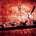 Defiance by Andrew Paranavitana