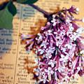 Defining Lilacs by Nina Silver