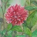Dahlia Flower Grown In Apartment Garden by Saloni Verma