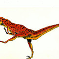 Deinonychus by Michael Vigliotti