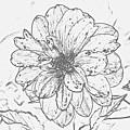 Lush Blossom by Jeramey Lende