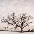Delaware Park Winter Oak - Color by Chris Bordeleau