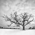 Delaware Park Winter Oak - Square by Chris Bordeleau