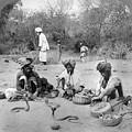 Delhi: Snake Charmers by Granger