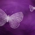 Delicate Butterflies Purple by Elisabeth Lucas