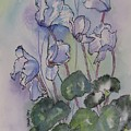 Delicate Cyclamen by Donna Cary