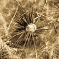 Delicate Dandelion by Venetta Archer