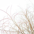 Delicate January Tree Branches by Morgain Bailey