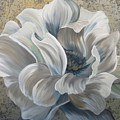 Delicate Reveal by Amy Chenoweth