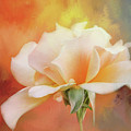 Delicate Rose On Color Splash by Terry Davis