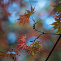 Delicate Signs Of Autumn by Mike Reid