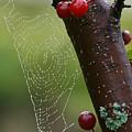 Delicate Spider Weave by Deborah Benoit