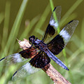Delicate Wings Of A Dragonfly by Kerri Farley