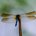 Delicate Wings by Stephen Whalen