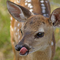 Delicious Deer by Heather Coen