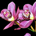 Delightful Orchid by Kaye Menner