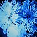 Delightfully Blue by Debra Lynch