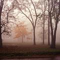 Delphi Park Annarbor Michigan In Fog by Richard Singleton