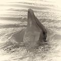Delphin 1 by Jouko Lehto