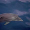 Delphin 9 by Jouko Lehto
