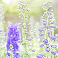 Delphiniums by Mary Angelini