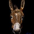 Dem-donkey by Reggie Duffie