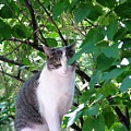 Demure Kitty by Tracey Vivar