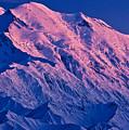 Denali Alpenglow by Tim Rayburn