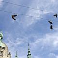 Denmark, Copenhagen, Amager Torv, Shoes by Sisse Brimberg & Cotton Coulson